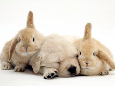 bunnies and kittens. Kittens, Puppies, Bunnies,