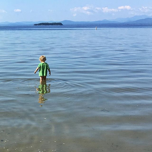 Minnow hunting with an invisible net. #lakechamplain