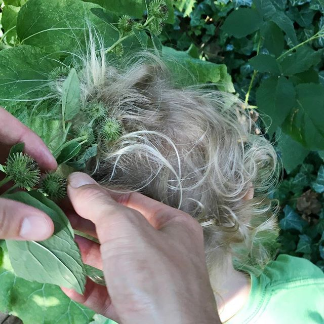 """The perils of backyard """"weeding"""" include an epic tangle of burrs for M and a yellow jacket sting for me. #wildchild"""