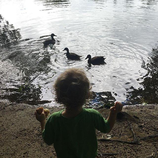 "We're going to miss the ducks of ""Scary Geese Pond"" when we finally move into our Somerville apartment this weekend. The trick is to throw the fish and ducks as much bread as possible before the hissing Canada geese paddle over. They are fast."