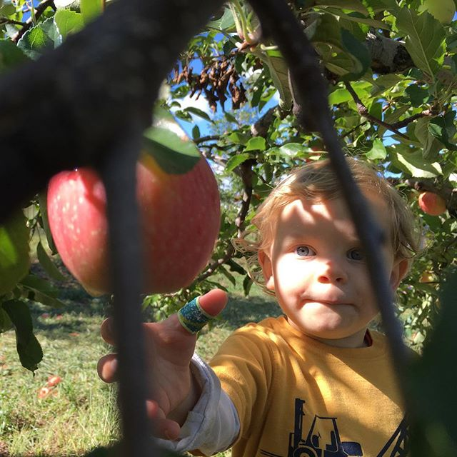 Many of the apples in our #brooksbyfarm haul have just one bite taken out of them. Wonder who did that?