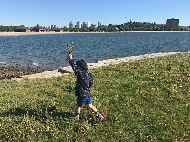 Didn't find any crabs at Carson Beach, but Pickles, the elephant, picked her daily dandelion quota.